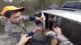 Download Deer hunting with dogs (kill shot) 12-3-16 Alex's first deer of the season Video