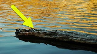 Download This Fisherman Spotted A Log In The Lake – Then Suddenly Knew It Was A Helpless Figure Drowning Video