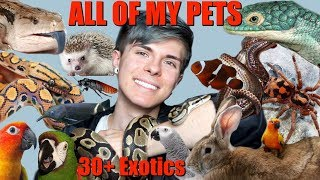 Download MEET ALL OF MY PETS! (Over 30 Exotic Animals) 2018 | Tyler Rugge Video