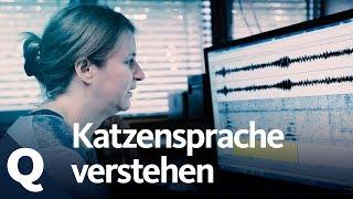 Download Katzensprache: Diese Frau kann ″kätzisch″ übersetzen | Quarks Video