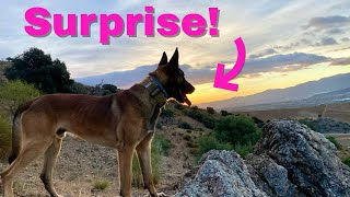 Download This dog got the shock of her life during surprise reunion! Video