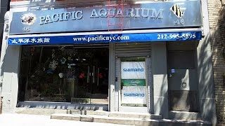 Download DE TIENDAS POR NUEVA YORK: Pacific Aquarium & Manhattan Aquariums Video