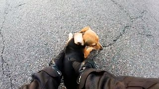 Download BIKERS ARE NICE   BIKERS HELPING OTHERS [Ep. #6] Video