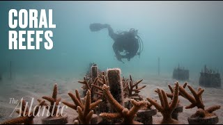 Download A Coral Reef Revival Video