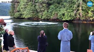 Download Two Humpback Whales swim up to guests at the Great Bear Lodge in British Columbia Video