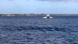Download World Cat 266 SC 1999 Sea Video