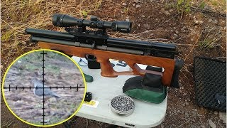 Download Cacería y Control de Plagas Con Rifle PCP Vulcan Calibre .25 - Hunting and Pest Control. Video