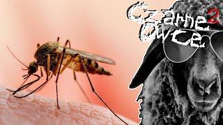Download Sposób na komary, mistrzowie parkowania, rymy plażowych sprzedawców i wczasy Dakanna [CZARNE OWCE]² Video