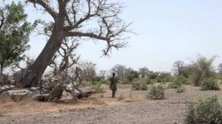 Download Families In Senegal Learn To Live With A Changing Climate Video