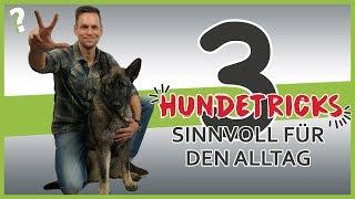 Download 3 sinnvolle Hundetricks für den Alltag | Hundeerziehung Video