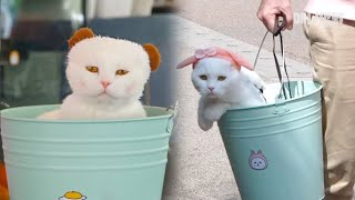 Download 냥동이 ㅣ Not A Bucket ″BuCat″ Cat Living His Best Life Inside A Bucket LOL Video