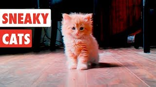 Download Sneaky Cats| Funny Cat Video Compilation 2017 Video