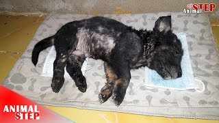 Download After 8 Months of Treatment His New Life is Began – Happy Ending! Video