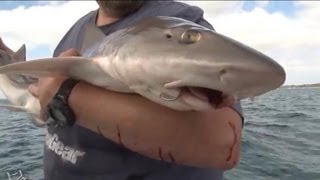 Download HOW TO CATCH GUMMY SHARK (SMOOTH HOUND) - YouFishTV Video