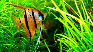 Download I like this store more than MY OWN! - Nature Aquarium Style Video