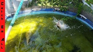 Download FISHING IN POOL pond CATCHING Giant PET BASS! Video