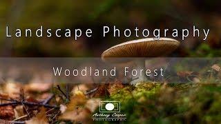 Download Landscape Photography - Woodland Forest Walk Video
