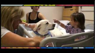 Download Animal Assisted Therapy Video