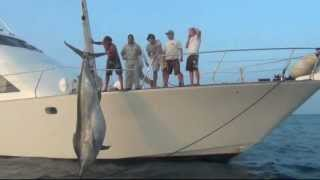 Download 1038lb Black Marlin Caught, Nov 23 2011 - Little Audrey Game Fishing Charters Video
