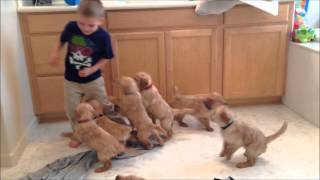 Download The 9 Puppy Chase & Tackle || Family Fun Pack Puppies Video