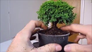 Download How To Make a Bonsai Tree From a Nursery Stock Tsukumo Video