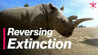 Download Reversing Extinction for the Northern White Rhino | Freethink Video