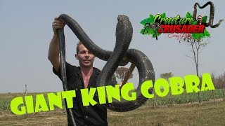 Download Top 10 Dangerous Animals in the World Video