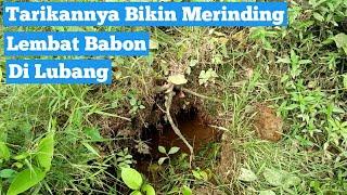 Download MANCING LEMBAT SUPER BESAR DI LUBANG AJAIB Video