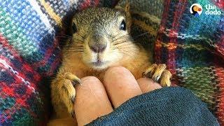 Download Rescue Squirrel Asks His Parents To Adopt Him - PEANUT | The Dodo Video