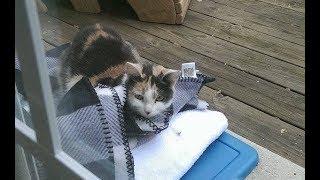 Download 家に通ってくれていた野良猫を、家の中に招き入れてあげると・・・衝撃のプレゼントを持ってきてくれた! Video