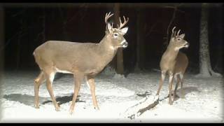 Download Deer Trail Pictures From (12-11- 16) Video
