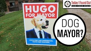 Download What Happens When a Town Votes For a Dog or Cat to Be Mayor Video