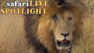 Download The best of the Great Migration, witnessed in the Maasai Mara Video