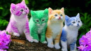 Download Cute Kitten Cat Colorful Learning Color Video For Kids Finger Family Nursery Rhyme Song Video