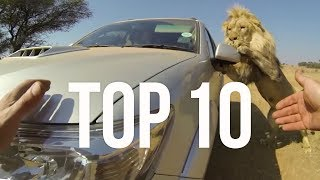 Download Top 10 Most Surprising Moments | The Lion Whisperer Video