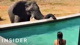 Download Swim Up Close With Elephants In This Pool Video