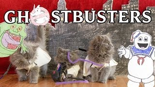 Download Ghostbusters (Cute Kitten Version) a tribute to Harold Ramis Video