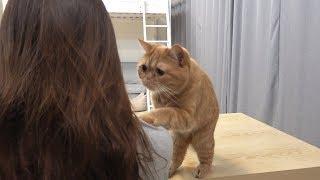 Download 고양이가 관심이 필요하면 생기는 일 Video