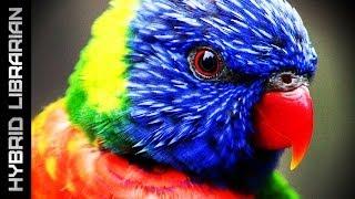 Download World's 15 Most Intelligent Animals Video