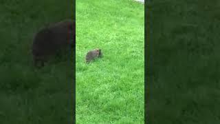 Download Hedgehog street: come on little one, let's go Video