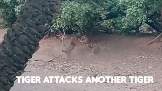 Download Tiger Attack Ranthambore - T98 vs Noor's cub - Tiger Fight Video