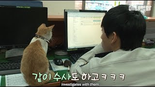 Download Mango the cat making itself comfortable at a police station Video