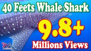 Download 40-Feet Long Shark in Karachi Fish Harbour 07-02-2012 Video