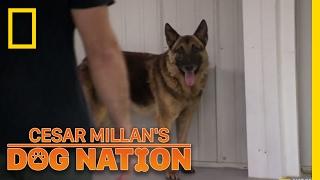 Download Approaching an Apprehensive Dog | Cesar Millan's Dog Nation Video