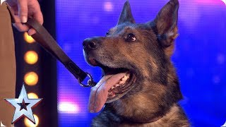 Download Heroic police dog Finn moves the Judges to tears | Auditions | BGT 2019 Video