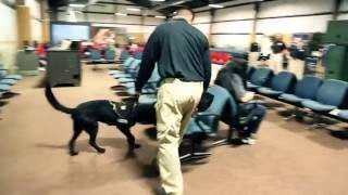 Download Inside Look: TSA Canine Training Video