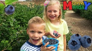 Download Blueberry Picking & Finding Dory Fun || Mommy Monday Video