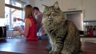 Download How To Help When Your Cat is Not Eating Video