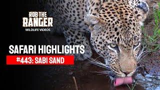 Download Idube Safari Highlights #443: 30 October - 04 November 2016 (Latest Sightings) (4K Video) Video