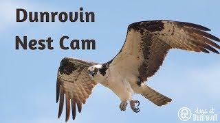 Download Dunrovin Nest Cam Video